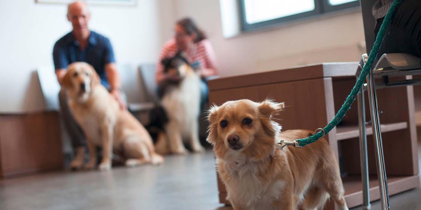 Tiergesundheitszentrum Mönchengladbach