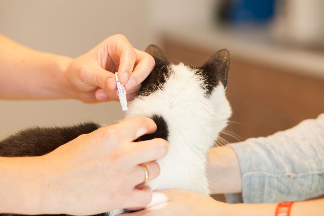 Untersuchung einer Katze