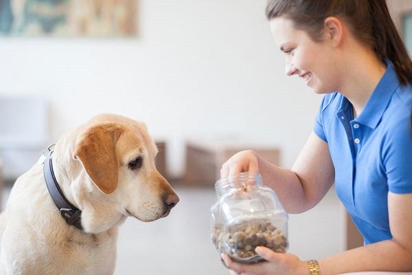 Praxishund und Auszubildende