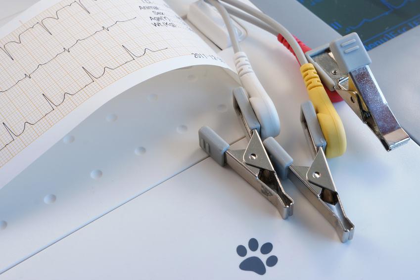 Herzultraschallgerät