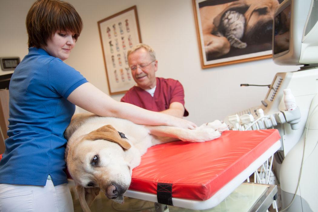 Ultraschalluntersuchung bei einem Hund